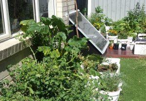 Garden and solar hot water box in sun